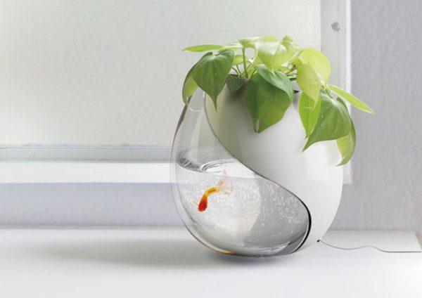 Mẫu bể cá bằng kính độc đáo tại nhà