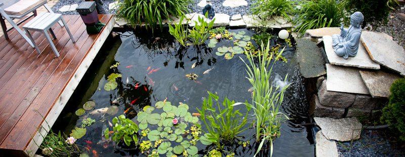 bạt lót hồ cá hdpe