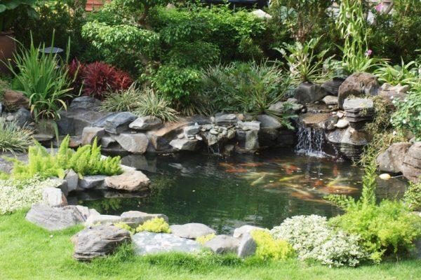 Hướng dẫn tạo hồ cá cực đẹp trong khu vườn của bạn