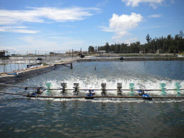 8 Lợi ích của việc sử dụng bạt HDPE lót ao hồ tôm