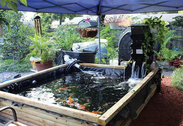 Thiết kế hồ cá bằng bạt nhựa HDPE chuyên dụng