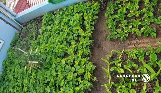 Vườn rau đánh luống lót bạt trên sân thượng
