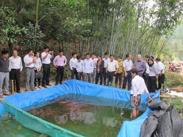 Nuôi lươn không bùn và nuôi cá lóc trên bể lót bạt tại An Giang