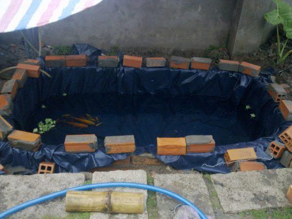 Hồ cá lót bạt tự làm bằng đam mê giá siêu rẻ