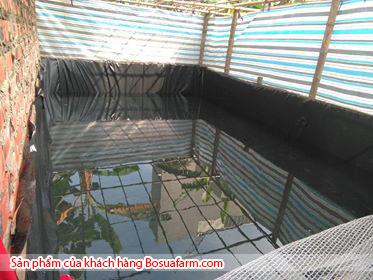 Ảnh hồ nuôi cá lót bạt chống thấm HDPE của bác Ngọc tại Hà Đông Hà Nội