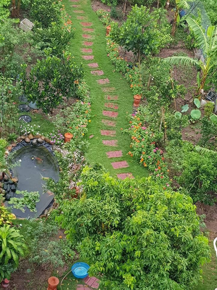 Vườn cây ao cá bạt HDPE của bác Trần Đức