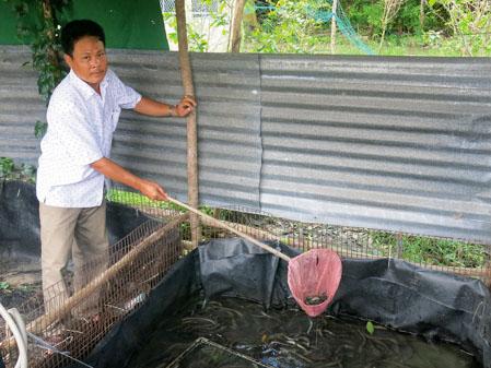 Mô hình nuôi lươn bằng bể lót bạt tại Sóc Trăng
