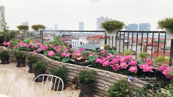 Vườn hồng ao sen thơm ngát trên sân thượng của chị Thúy – Hà Nội