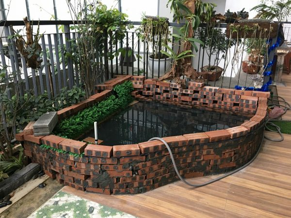 Bể cá lót bạt trên sân thượng của Mr Tùng Vạn Phúc Hà Đông
