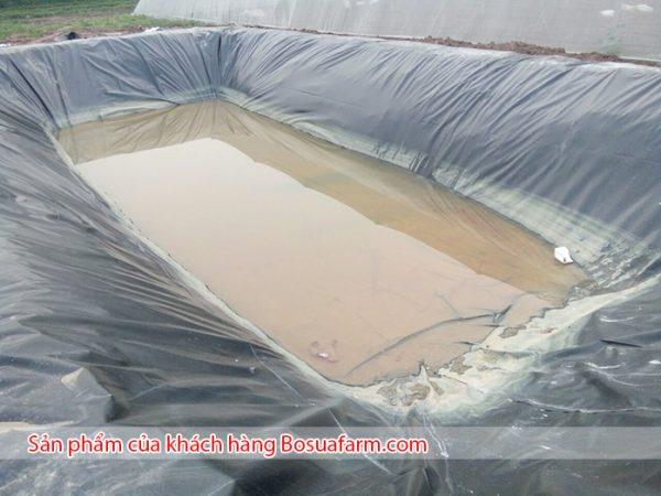 Bể lót bạt chứa nước tưới rau của anh Hảo tại Giang Biên Hà Nội