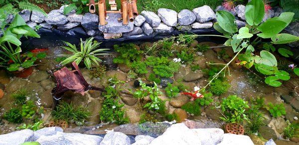 Bạt lót hồ cá thủy sinh của Anh Hiệu tại Yên Bái