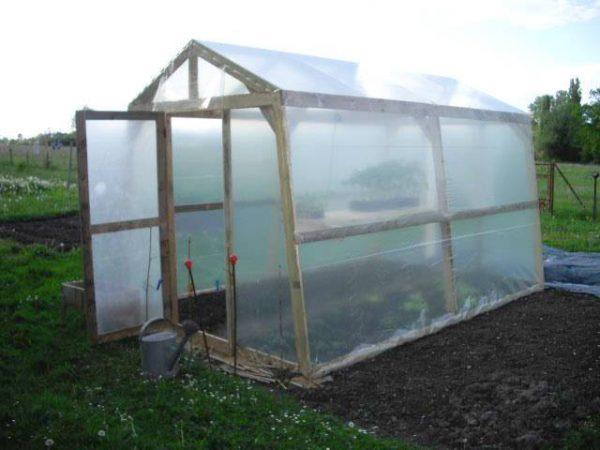 Nhà kính trồng rau tự chế kiểu nông dân thành phố