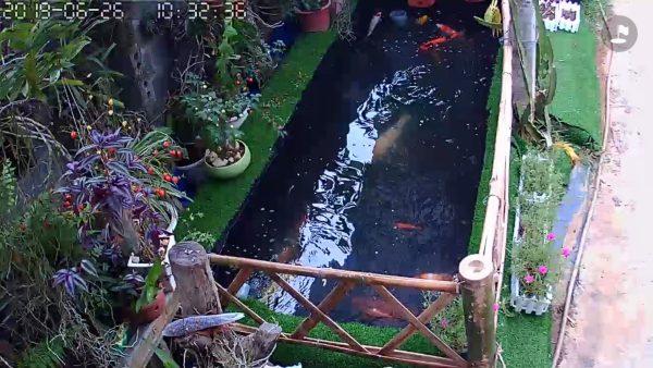 Riview bể cá lót bạt qua CAM của Mr Long