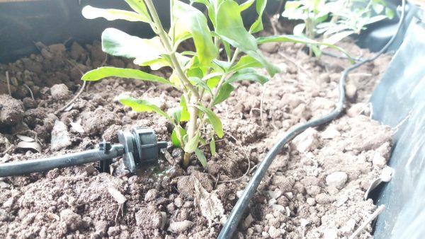Bạt chống thấm bể cá, trồng rau của bác Thanh Hà Nội