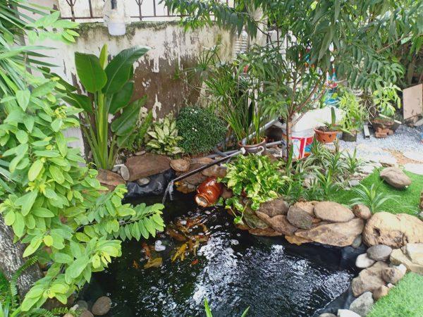Bạt lót hồ cá của bác Việt ở Phúc Thọ Hà Nội